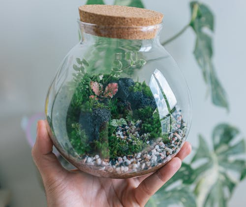 Green and Brown Plant in Clear Glass Jar