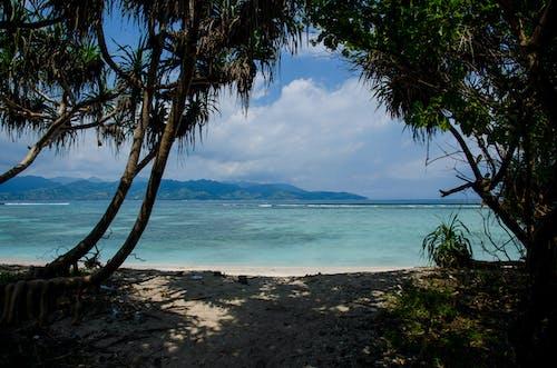 假日, 假期, 樹木, 海 的 免費圖庫相片