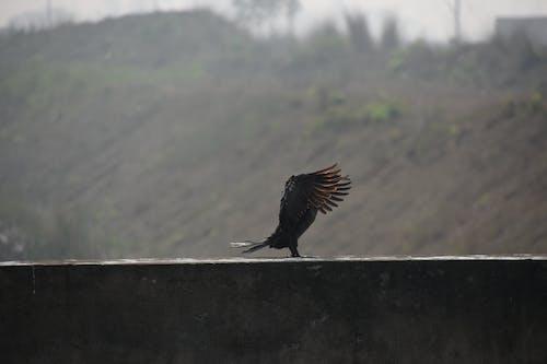 Free stock photo of birdslove