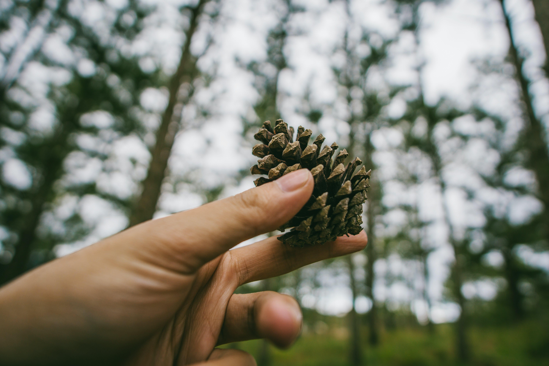 Darmowe zdjęcie z galerii z drzewa, głębia pola, krajobraz, las