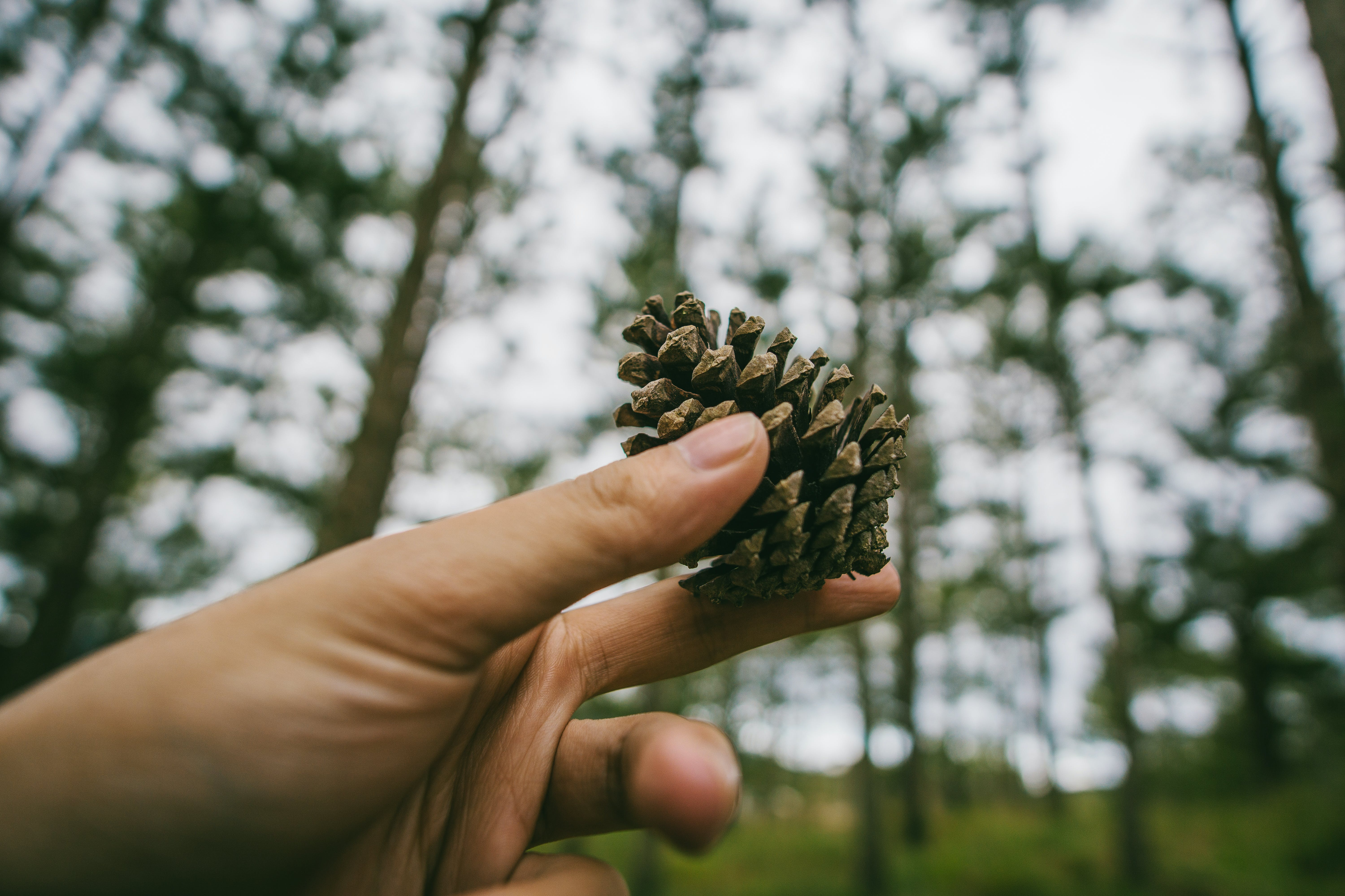 Photography of Hand Holding a Pine cone