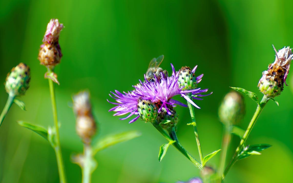 abella, brillant, brots