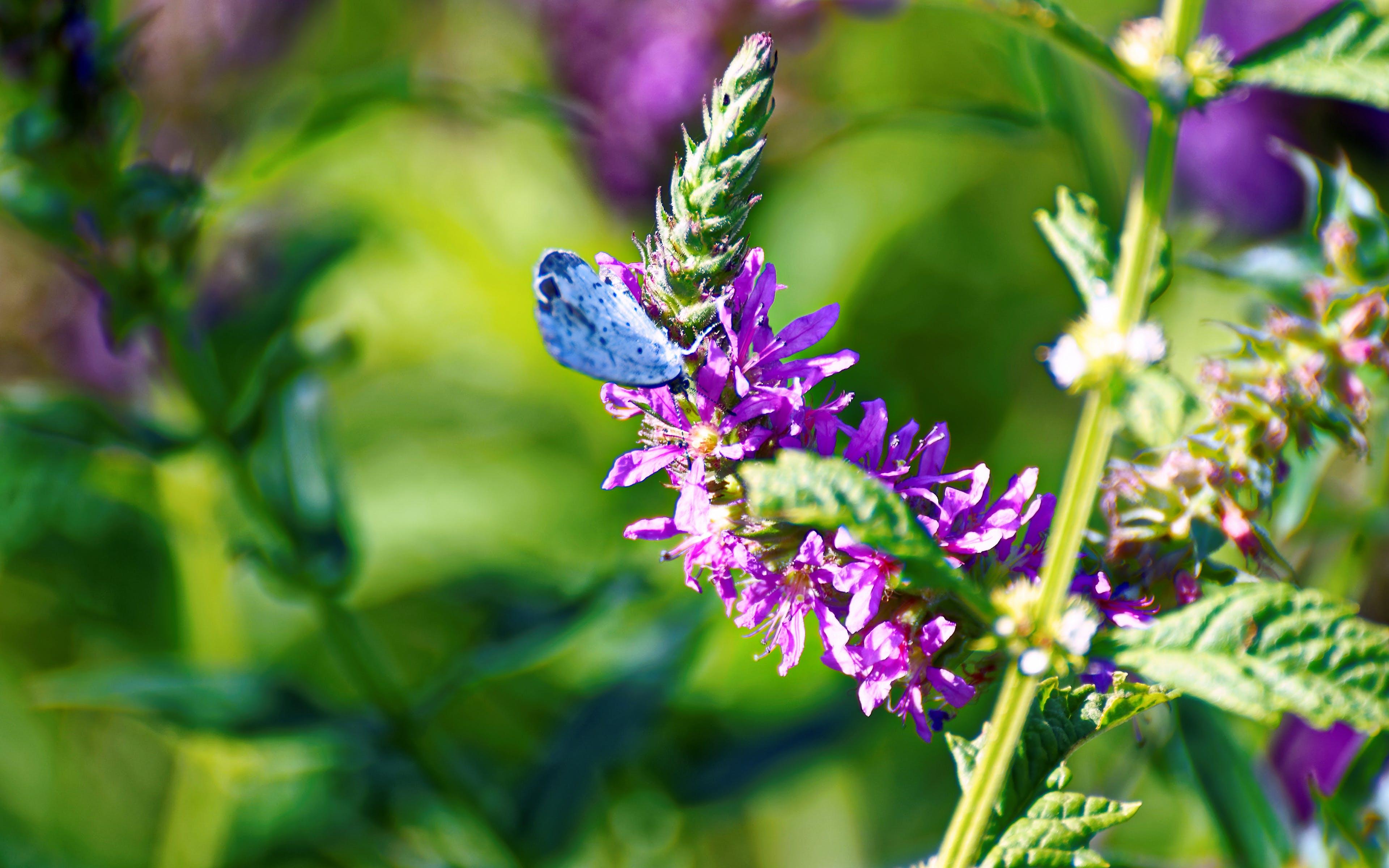 Purple Petaled Flower With Blue Butterfly