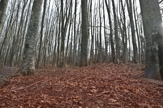 Free stock photo of wood, landscape, nature, winter
