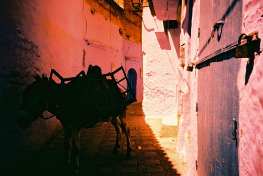Donkey At A Alley