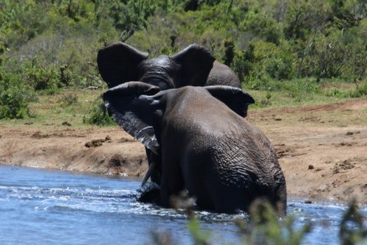Free stock photo of nature, water, big, animals