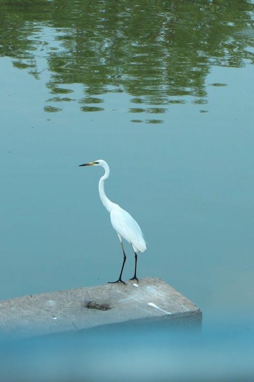 Free stock photo of birdphotography, canon, community
