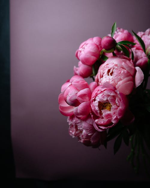 Close Up Photo of Peony Flowers