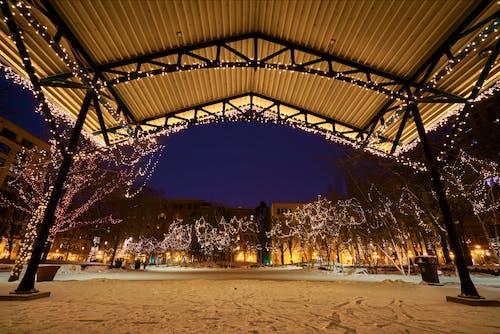 Imagine de stoc gratuită din arbori, beculețe de crăciun, cer, congelare