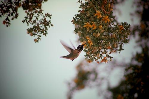 Free stock photo of adventure, animal, avian