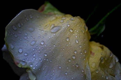 Foto profissional grátis de beleza, cores, depois da chuva, escuridão