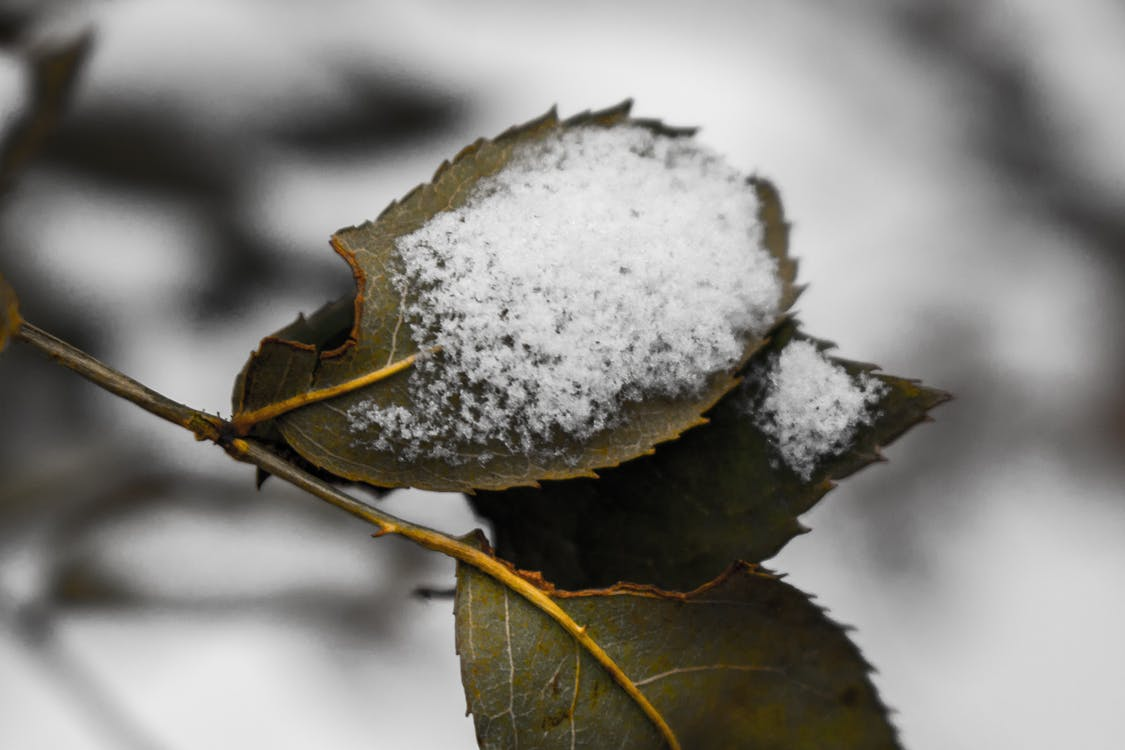draussen, natur, schnee