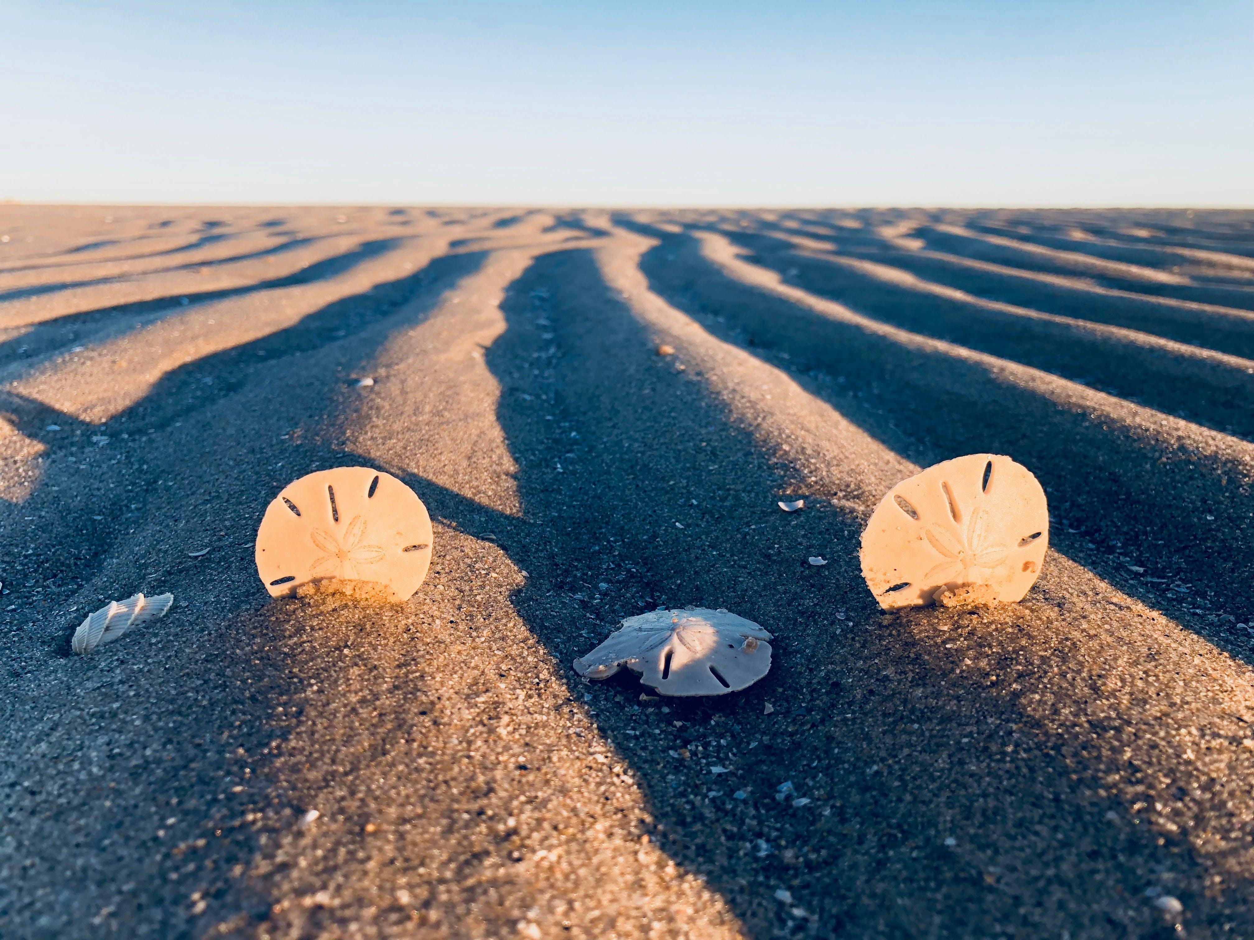 Three Sand Dollars on Sand