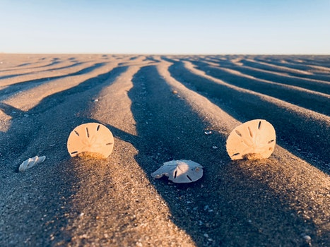 Three Sand Dollars on Sand