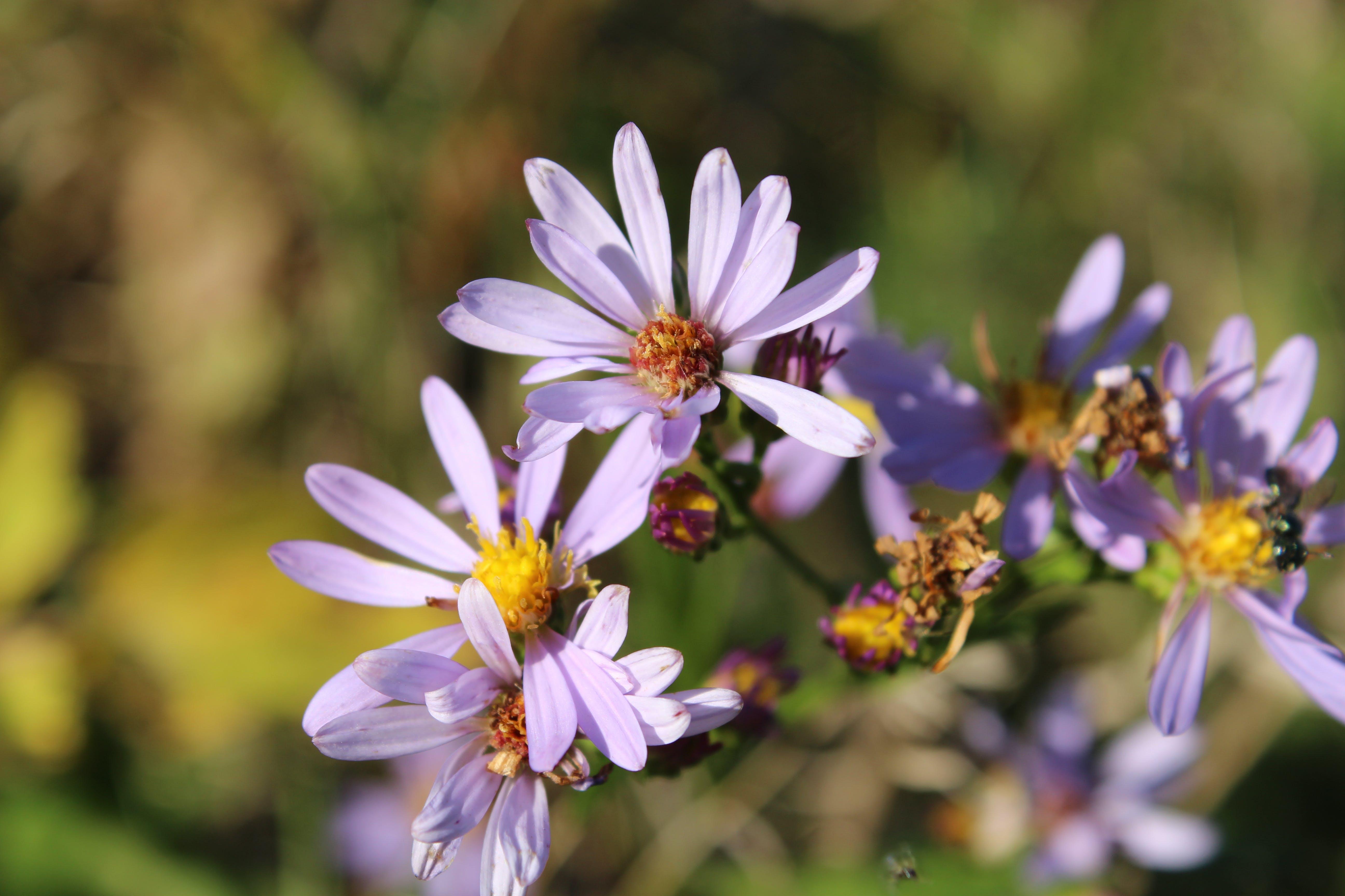 Purple Flower Macro Shot Shallow Focus