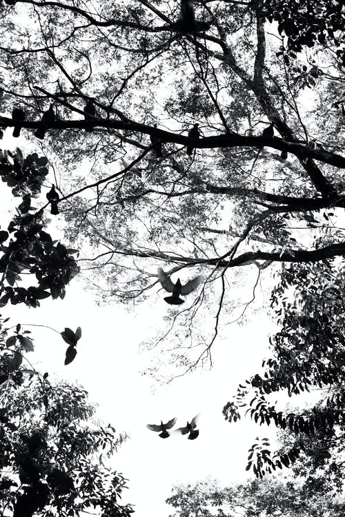 Grayscale Photo of Tree Branches