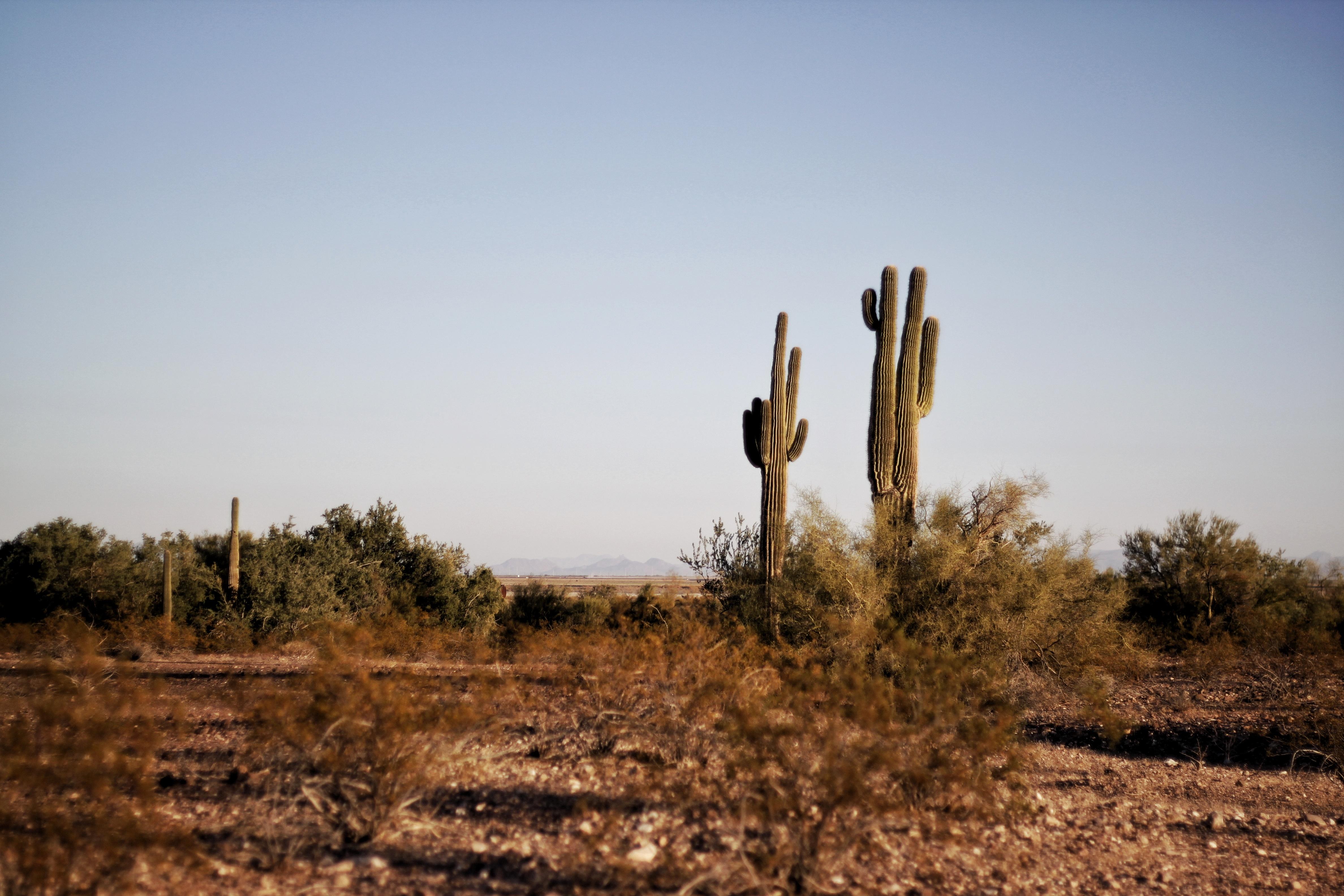 Laredo Texas Border Patrol agent