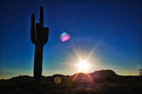 araba yolculuğu, arizona, doğa, kaktüs içeren Ücretsiz stok fotoğraf