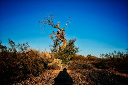 亞利桑那州, 天性, 寬, 德州 的 免費圖庫相片