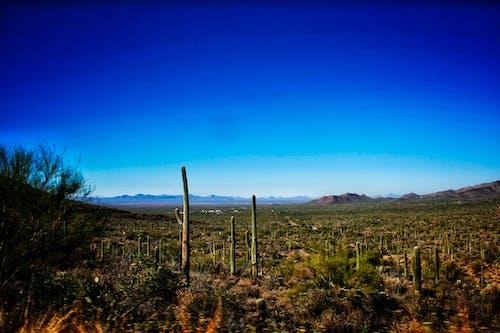 亞利桑那州, 仙人掌, 天性, 天空 的 免費圖庫相片