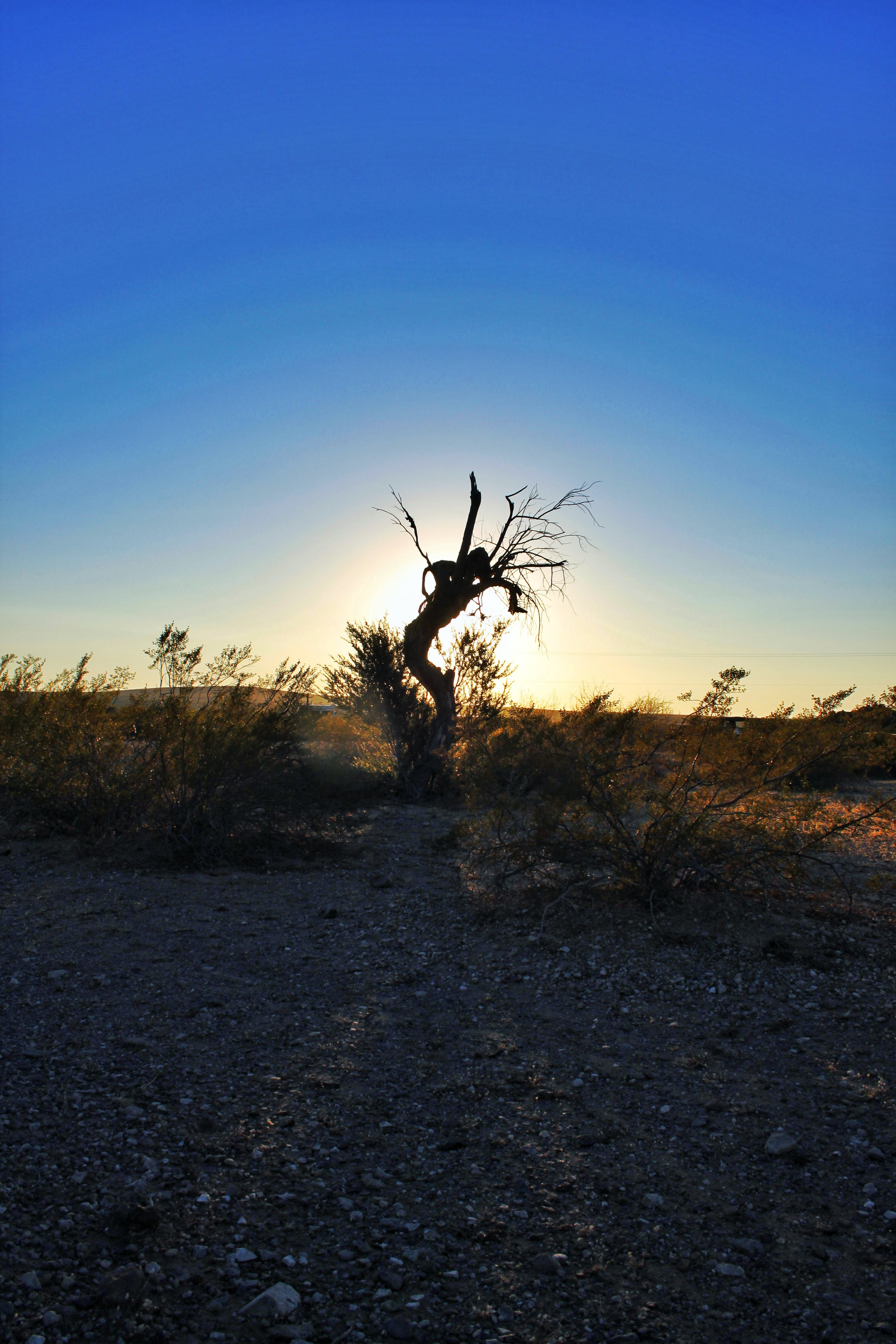 Free stock photo of arizona, bushes, green, nature
