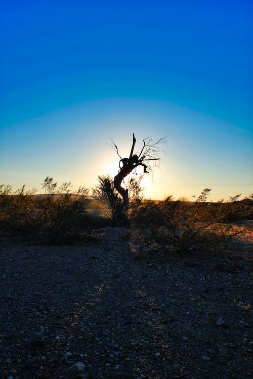 ağaç, arizona, çalılar, doğa içeren Ücretsiz stok fotoğraf