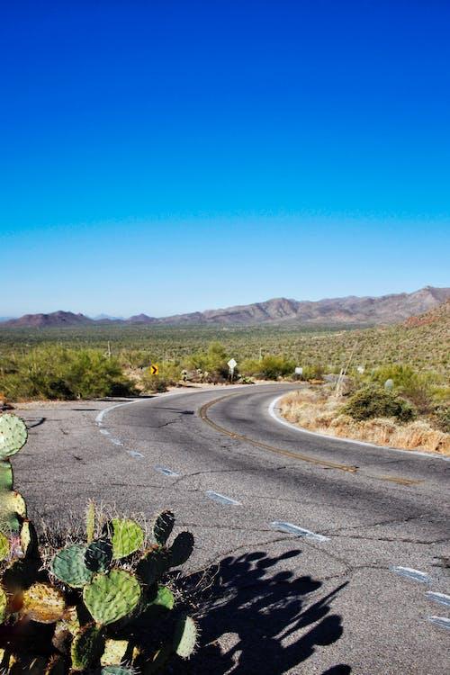 araba yolculuğu, arizona, bitki, doğa içeren Ücretsiz stok fotoğraf