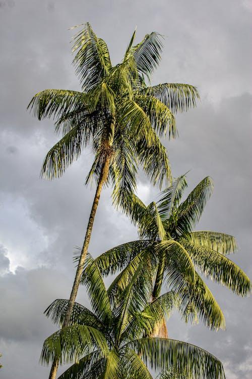 Gratis stockfoto met blad, boom, eiland