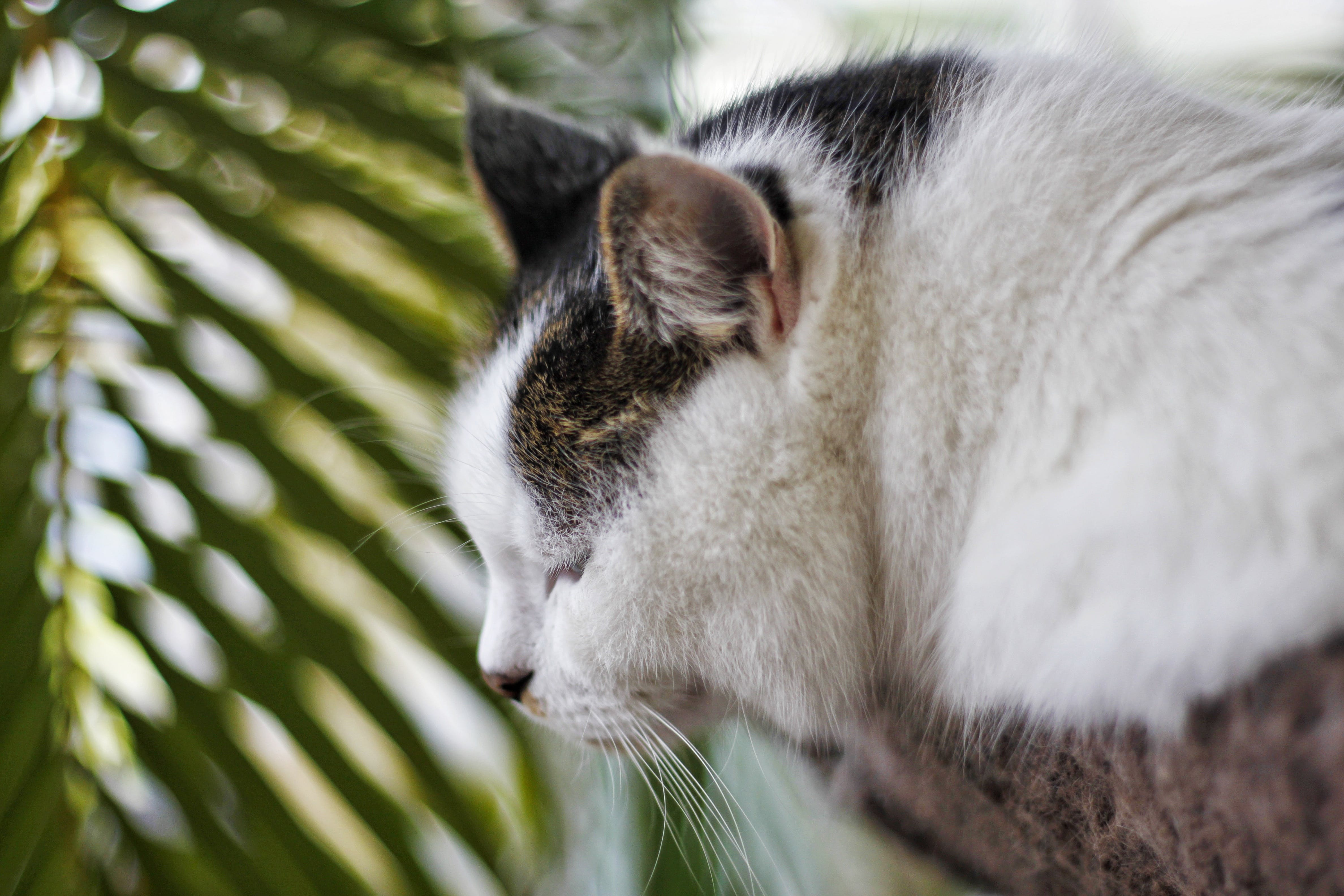 Free stock photo of cat, kitty, sleep
