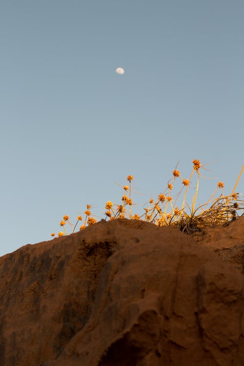 Brown Flowers on Brown Rock Formation
