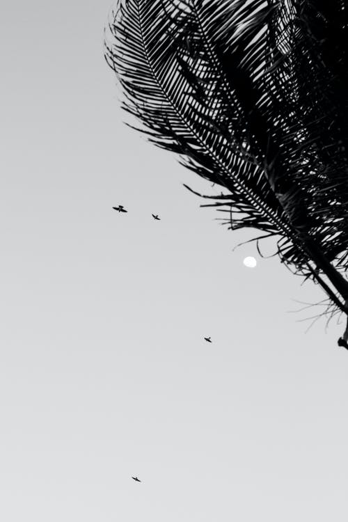 Birds Flying Under White Sky