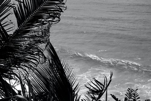 Grayscale Photo of Palm Tree Near Body of Water