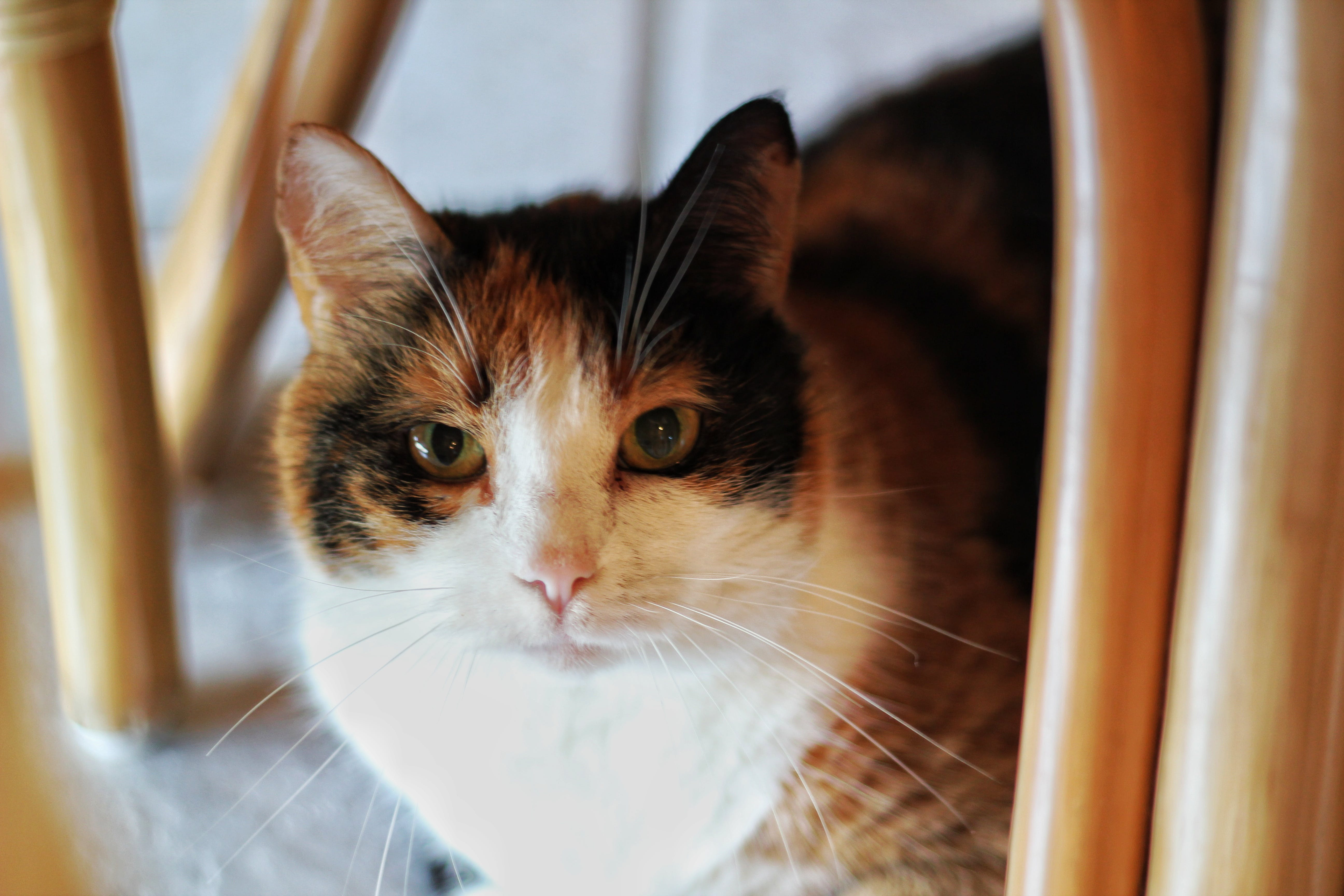 Free stock photo of cat, kitty