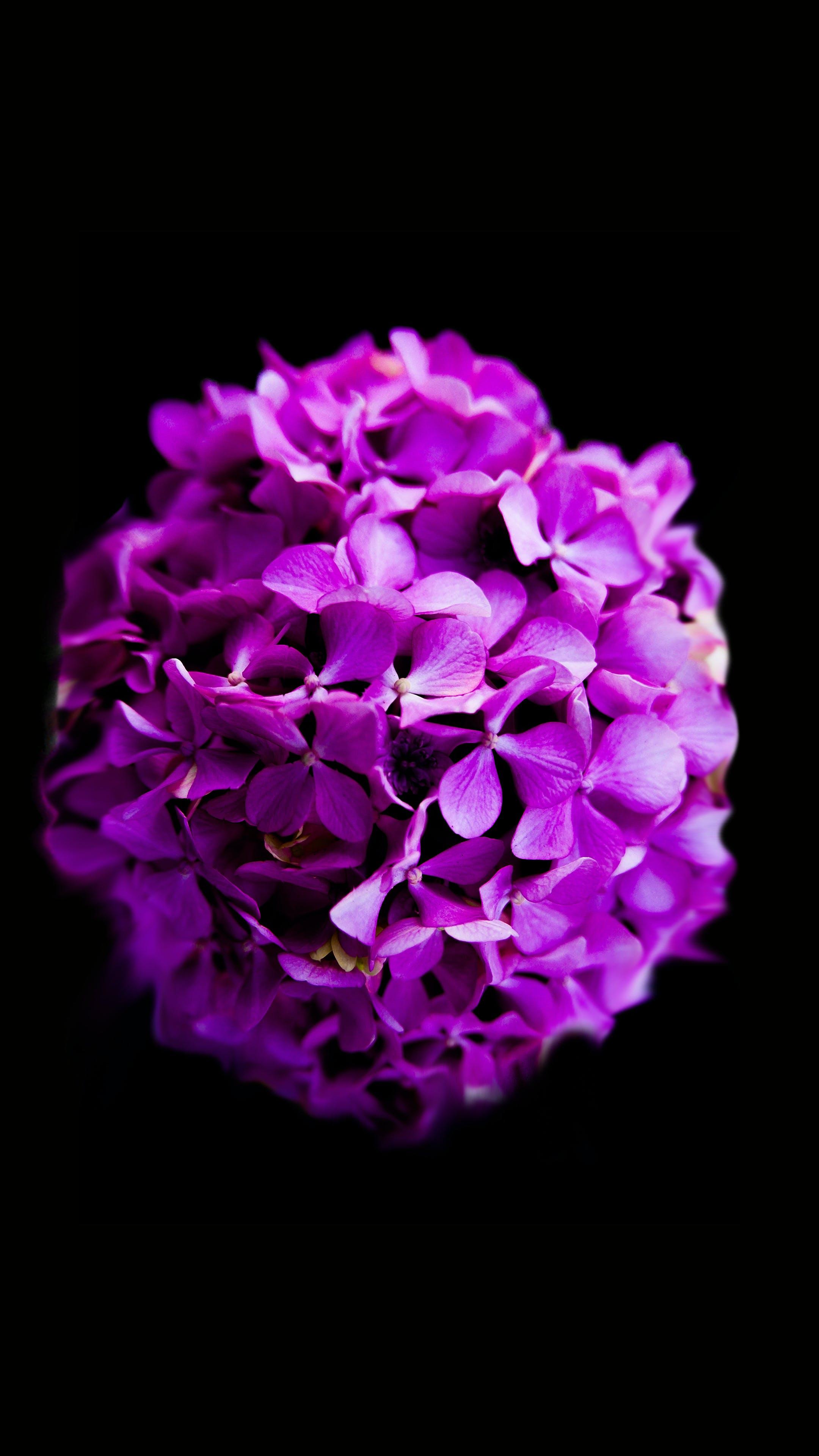 Základová fotografie zdarma na téma fialová, flóra, HD tapeta, jemný
