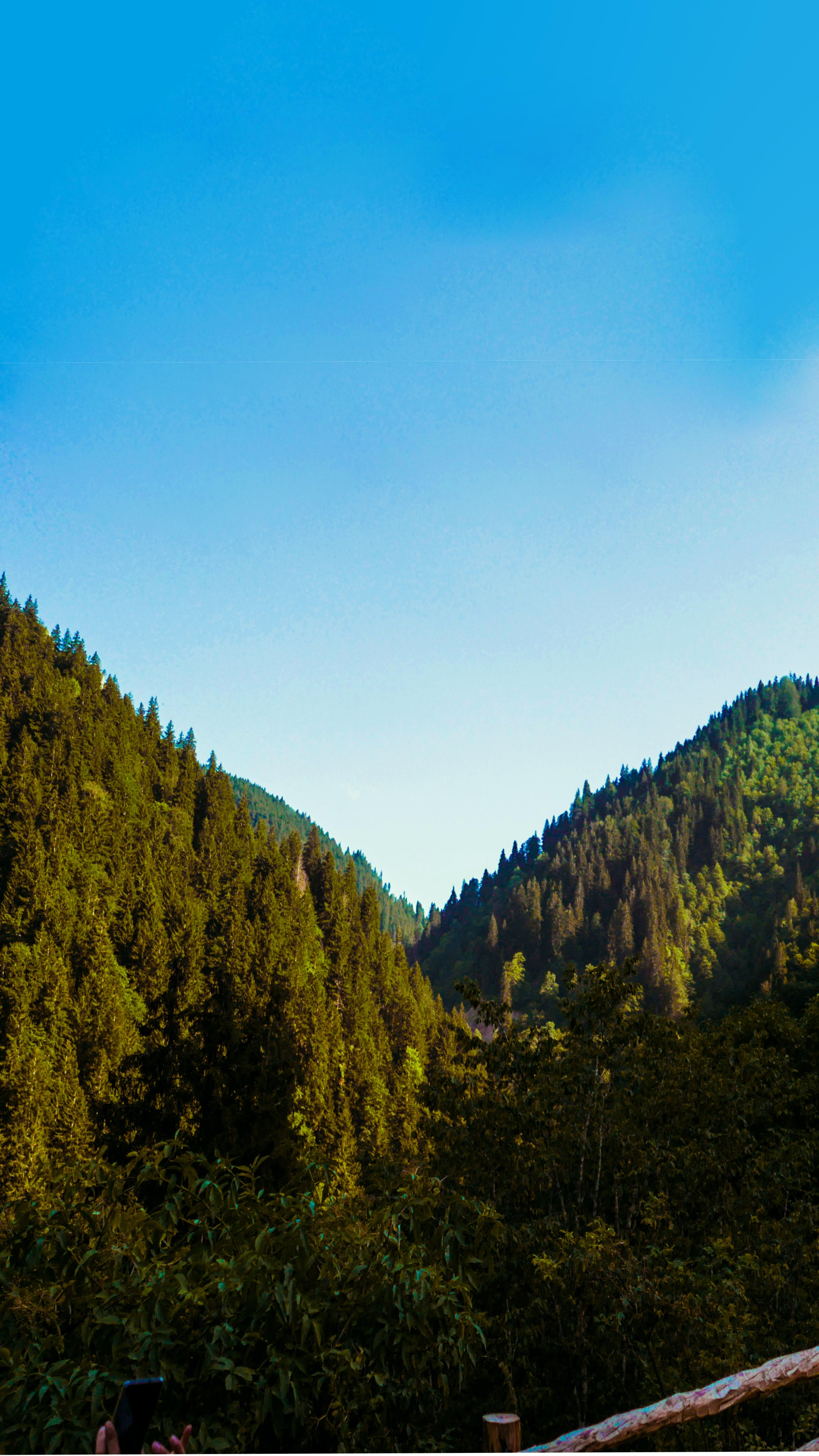 Free stock photo of Black Sea, forest, HD wallpaper, karadeniz
