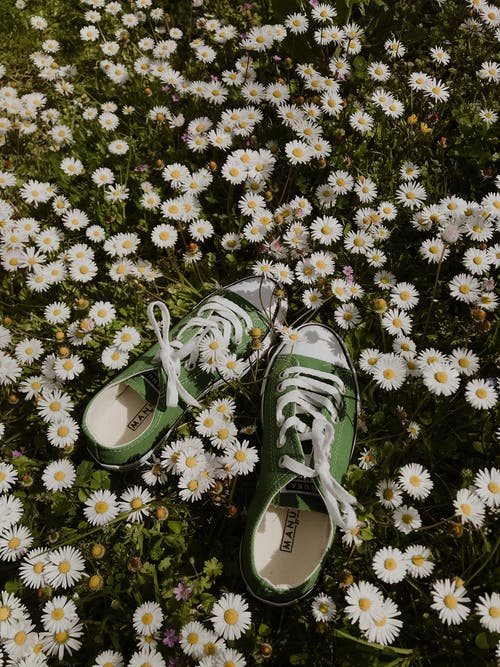 Pair of shoes on meadow with blooming chamomiles