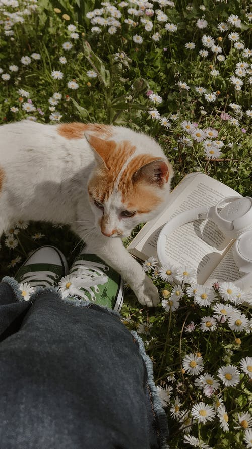 From above of crop unrecognizable female enjoying nature with cat and opened book with headphones on lawn with blooming chamomiles