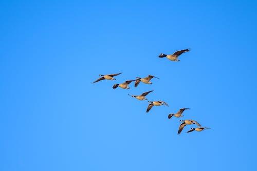 Gratis lagerfoto af blå himmel, dyr, dyreliv