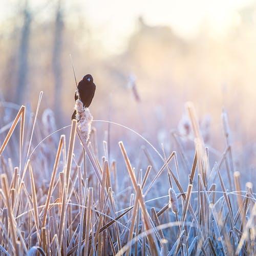 Gratis lagerfoto af bane, cattail, flora