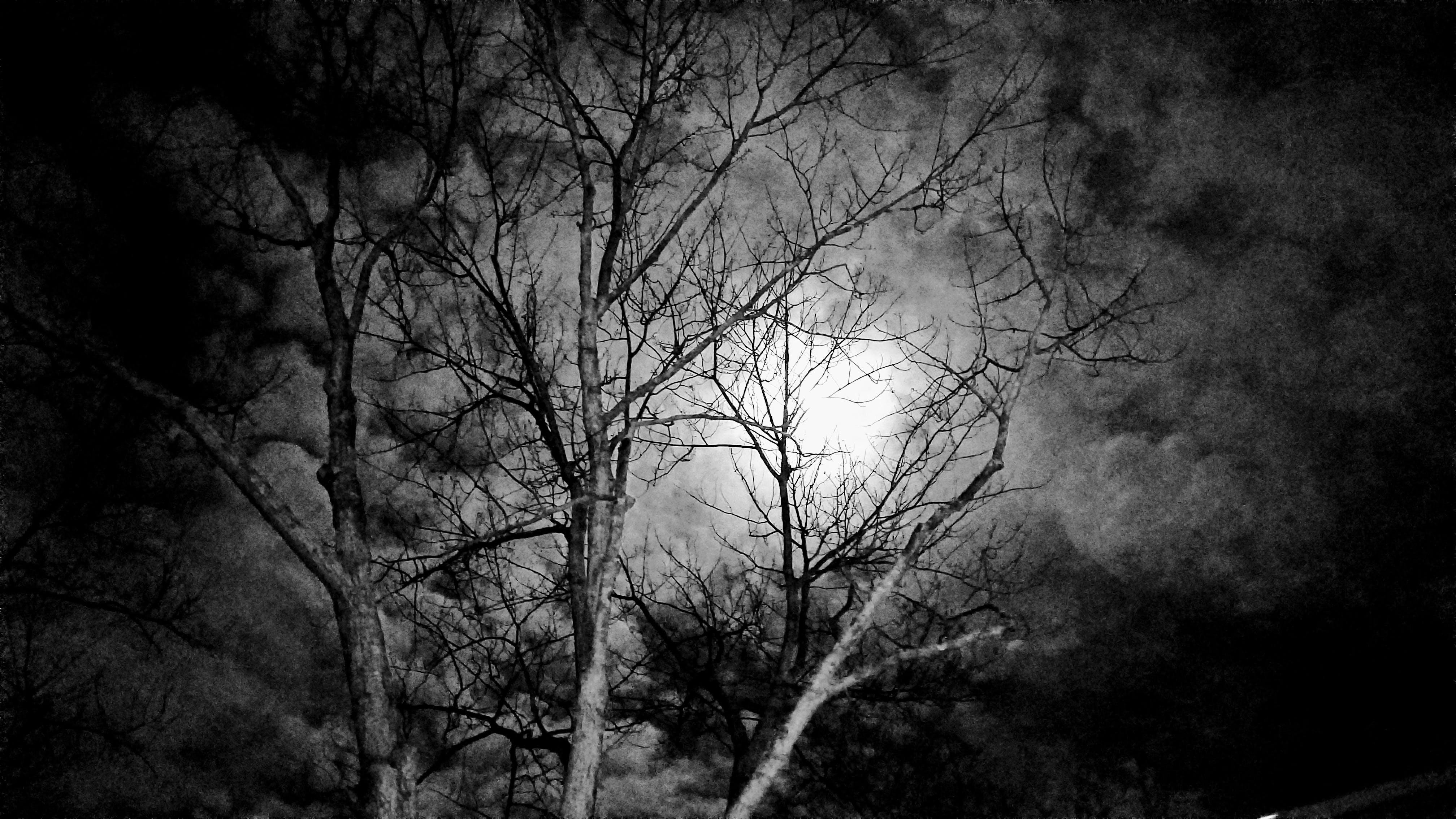 Gratis arkivbilde med mørk natt, nifs