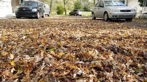 Ảnh lưu trữ miễn phí về lá rơi, lá rụng