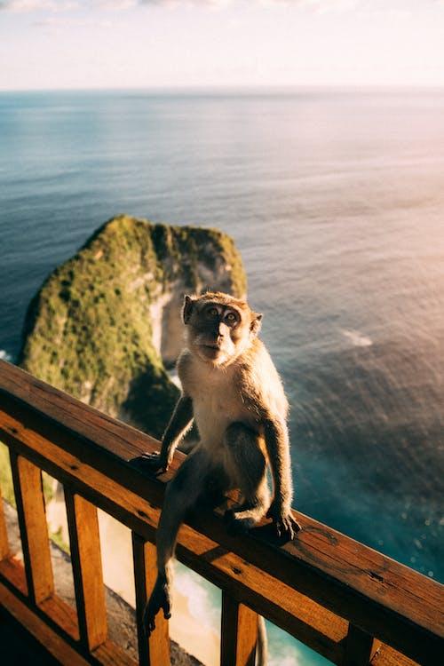 Photos gratuites de aventure en plein air, bali, bébé singe