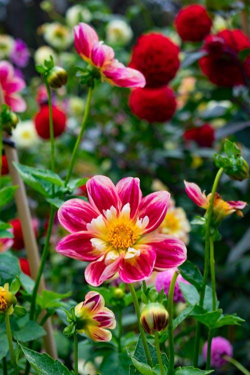Fotos de stock gratuitas de blanco, flor, flora