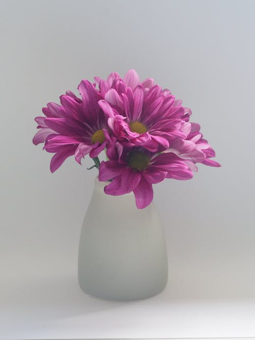 Pink Flowers on White Vase
