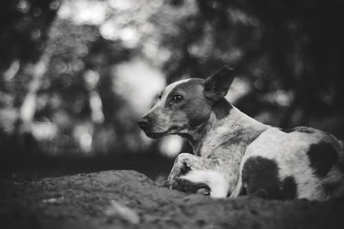 Foto d'estoc gratuïta de a l'aire lliure, adorable, animal, blanc i negre