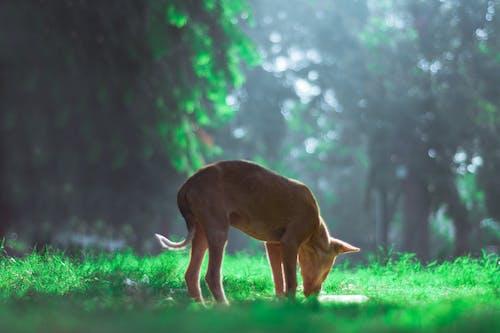 Foto profissional grátis de árvores, cachorros, de pé, dg