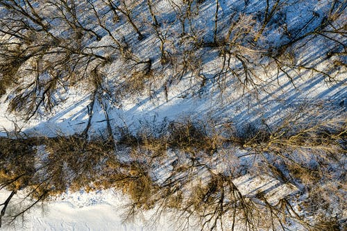 Free stock photo of branch, bright, cold