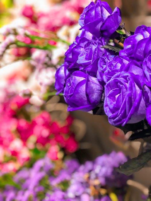 Free stock photo of background, beautiful, beauty