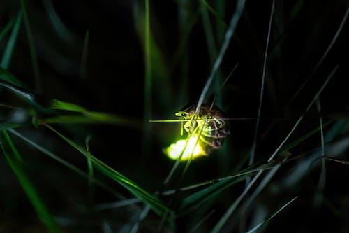 Ilmainen kuvapankkikuva tunnisteilla elateriformia, elateroidea, feromonit