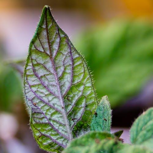 건강한, 건강한 식물, 나뭇잎의 무료 스톡 사진